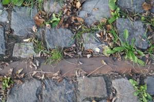 Schiene am Alten Elbhafen, Wittenberg, 03.10.2014, LWi-0069