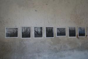I. Krauss, Photos vom inneren Friedhof, März 2014, Ausstellungsausschnitt