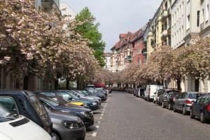 Zierkirschen-Baumblüte Raabestrasse, Berlin-Prenzlauer Berg, 01.05.2015