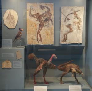 Vogelfossilien und ihre Modelle, Museum Schloß Eichstätt