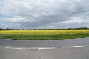 Rapsfeld, Zechin, 17.05.2015