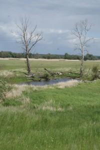 Alte Oder - Teich, Am Oderdamm bei Bleyen, 17.05.2015