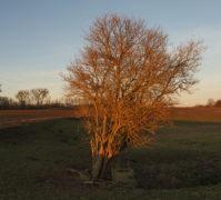 Baum-Belichtet, Feld hinter Obersdorf, Foto: E. Hartwig 02.01.2020 (_37)