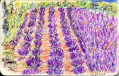 Lavendel bei Puimichel, 15.07.2018, Fineliner, Farbstifte, 8,9 x 14 cm