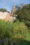 Burgturm vom Garten aus, mit Apfelbaum